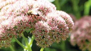 Be Informed About Neonicotinoids And Pollinators