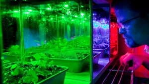LEDs Could Eventually Manipulate Scent, Color In Ornamentals And Edibles