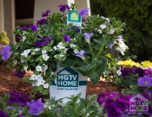 The HGTV HOME Plant Collection