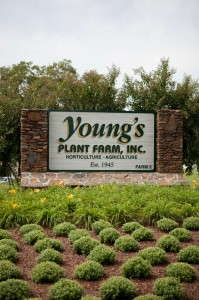 Young's Plant Farm