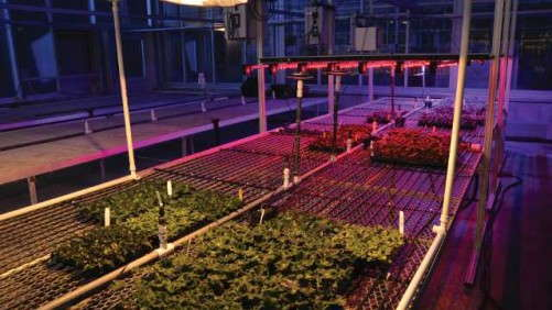 Tips For Cherry-Picking The Right LED Lighting Solution For Your Greenhouse
