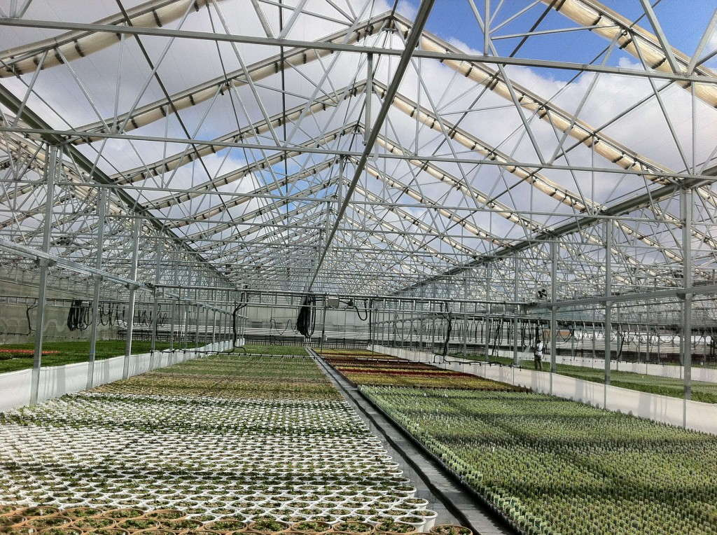 Open roof greenhouses