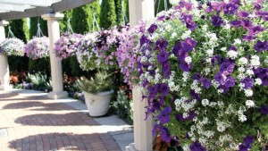 MSU's Horticulture Gardens Celebrate 20 Years