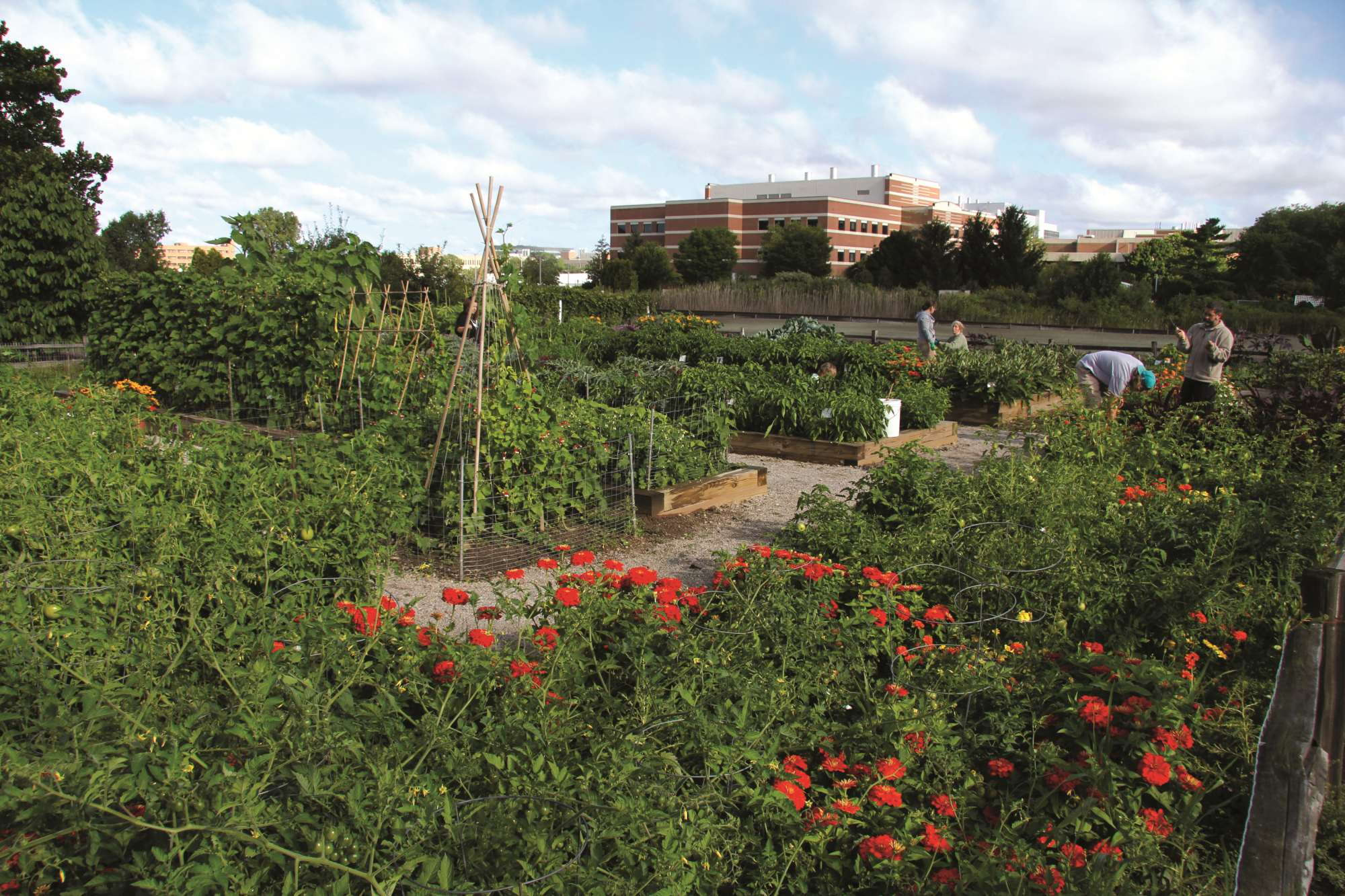 MSU\'s Horticulture Gardens Celebrate 20 Years - Greenhouse Grower