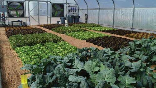 Focus On Fertilizer: Micronutrients And Organics