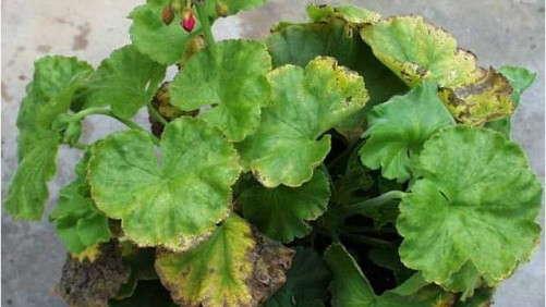 Fertilizer Changes Growing Mix pH