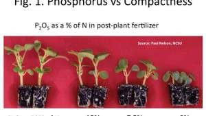Basics & Beyond: Fundamentals Of Phosphorus Nutrition