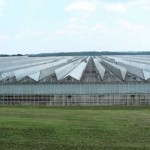 Metrolina Greenhouses
