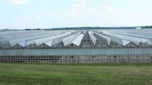 Greenhouse Glazings FAQ: National Greenhouse Manufacturers Association Offers Advice