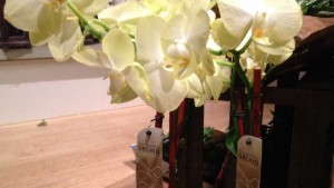 Sell Foliage And Tropical Plants As Home Décor Items