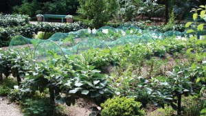 Sellable Benefits Of Community Gardens