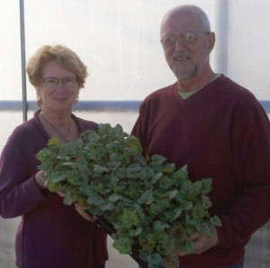 Dave and Wyona Babikow, Emerald Coast Growers