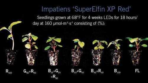 Growing Seedlings Under LEDs: Part Two