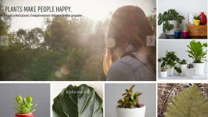 The Sill Shows New Yorkers How Plants Enhance Their Lives