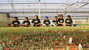 AmericanHort Issues Statement on the House Judiciary Committee Approval of the Agricultural Guest Worker Act