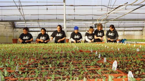 The Top 100 Growers Speak Out on Changes Needed in Immigration Reform