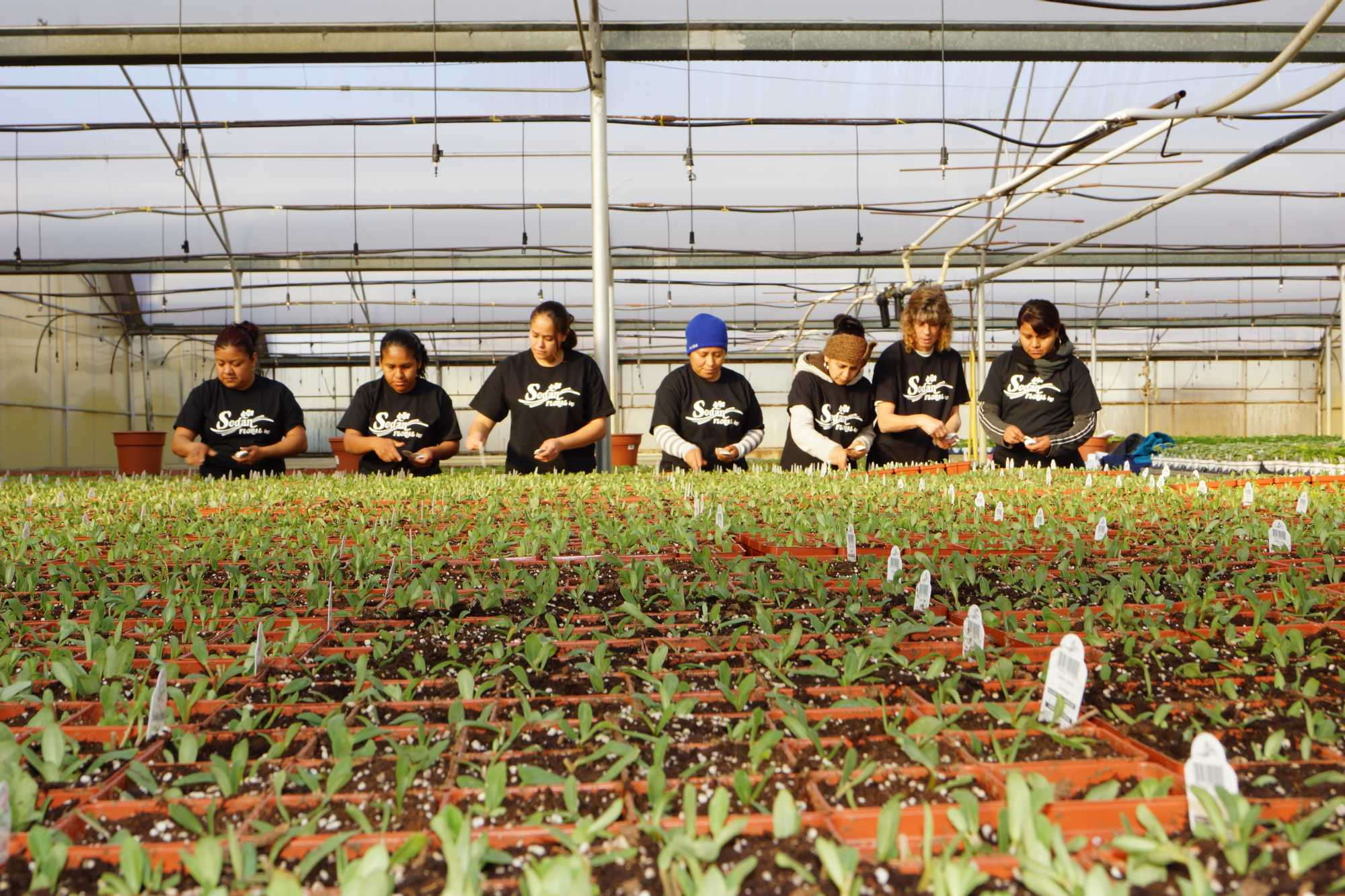 The Top 100 Growers Speak Out on Changes Needed in Immigration ...
