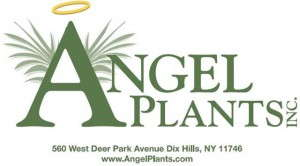 Angel Plants