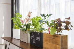 Modern Sprout hydroponic planter
