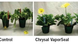 How Two Postharvest Care Products Worked On Potted Plants