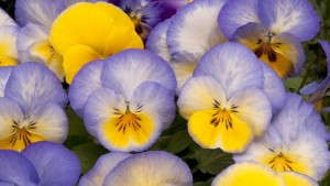 Eco-labeling: Study Shows Which Terms Are Effective In Marketing Ornamental Plants
