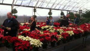 University of Florida Poinsettia Trials Will Be Held December 9