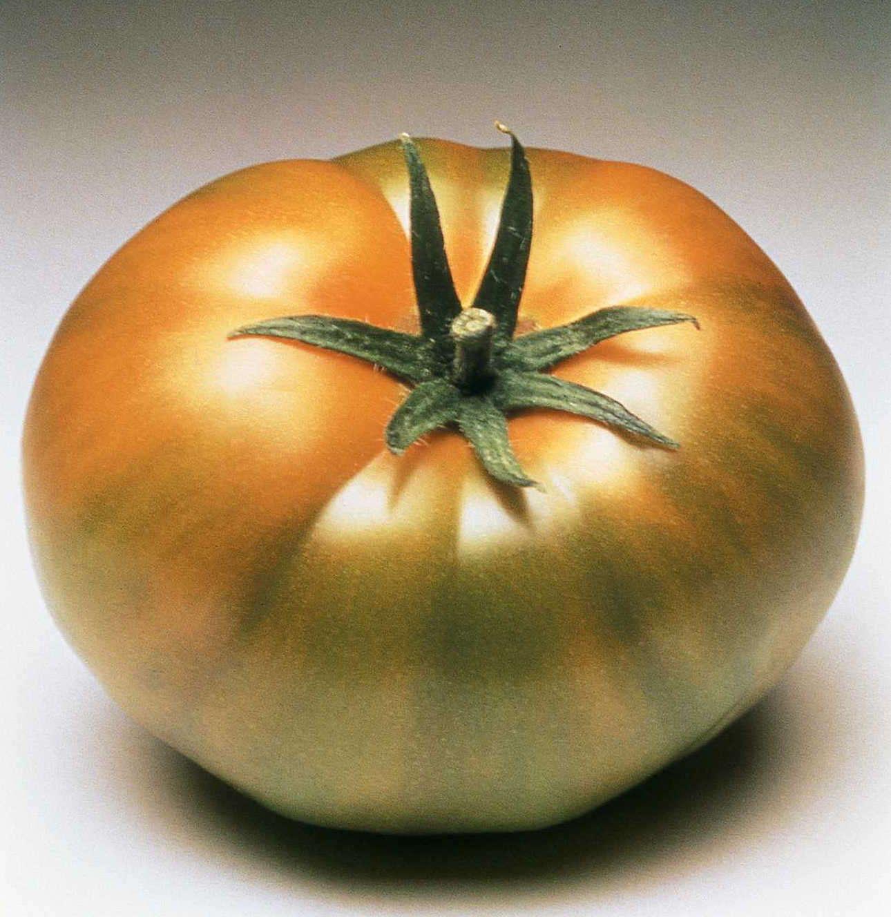 Syngenta Plant Protection_Carmello Tomato