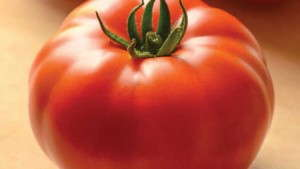 Three Michigan State University On-Demand Webinars Offer Effective Strategies For Insect And Disease Control On Vegetables