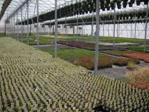 Greenhouse interior At Corsos