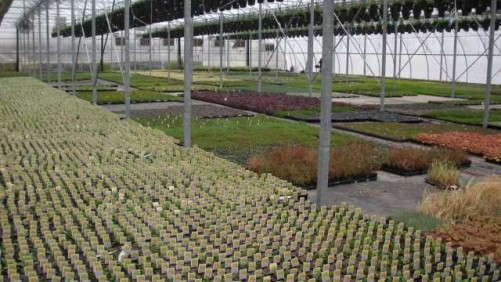 Will Greenhouses Add Production Space In 2014?