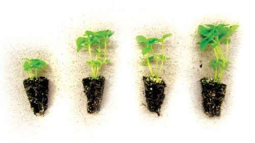 Switching To Organic Fertilizer