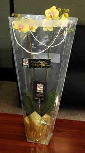 GROW Rocket Farms Oscars orchid