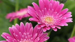 Variety Highlights From Suntory Flowers, EuroAmerican Propagators, Hort Couture, Flamingo Holland, GroLink, Athena Brazil And Plant Haven [Slideshow]