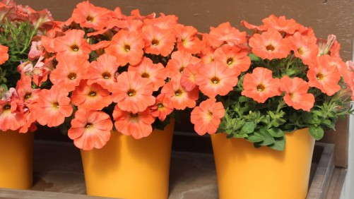 2014 Field Trials Results: Welby Gardens (Denver, Colo.)
