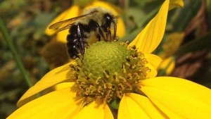 Protecting Bees Through Informed Pesticide Choices
