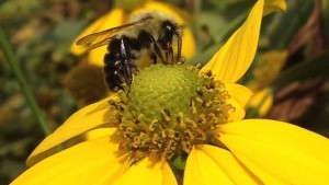 Update On The Pollinator Stewardship Initiative