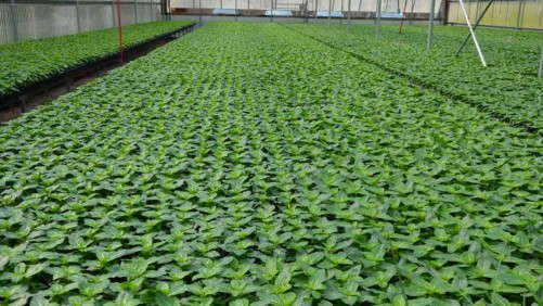Growing Your Crops Above Their Base Temperature