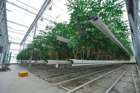 Futagrow Growing System Nominated For Greentech Innovation