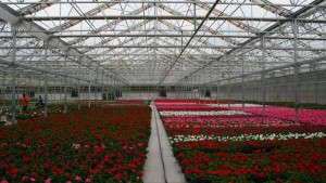 Lucas Greenhouses Gets A Jump On Spring Crops With Its Retractable Roof Greenhouse
