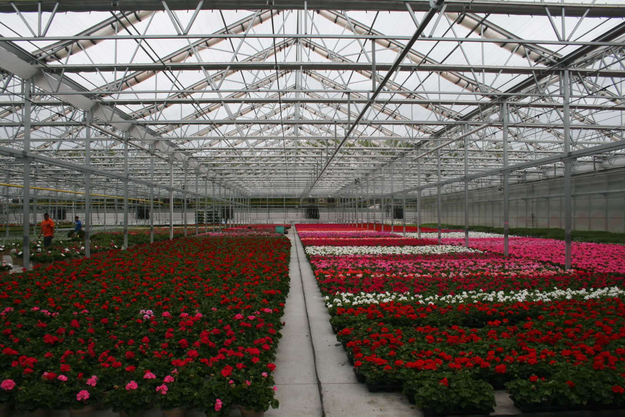 Lucas Greenhouses - Growing Spring AnnualsLucas Greenhouses