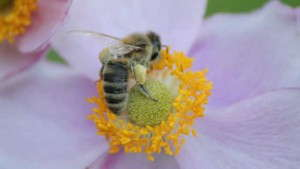 Seattle City Council To Vote On Citywide Ban Of Neonicotinoids