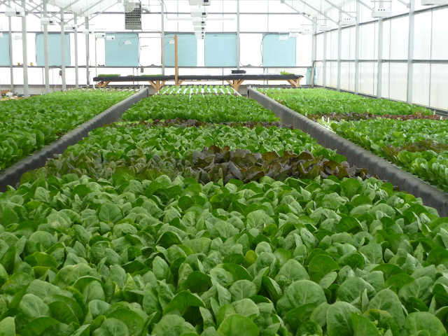 how to clean a greenhouse organically