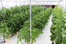 CropKing Offers Growers Workshop For Large Commercial Grower Or Backyard Hobby Grower