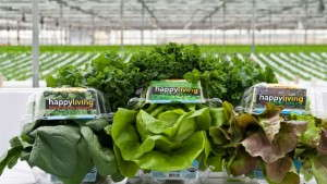 Meeting The Demand For Edibles: Go Green Agriculture Inc.