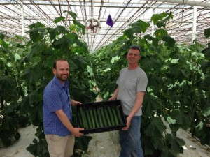 First Cukes, GardenHouse Farm, Matt Altman and Harry Vlottes
