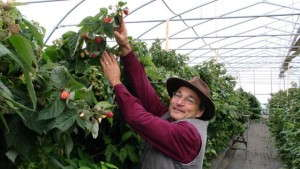 Meeting The Demand For Edibles: High Meadows Farm