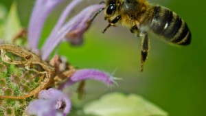 """Watch """"Neonicotinoids: Cutting Through The Clutter,"""" On YouTube"""