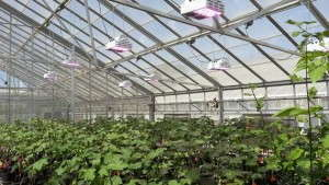 Historic Cotton Research Site Installs LumiGrow LED Lights