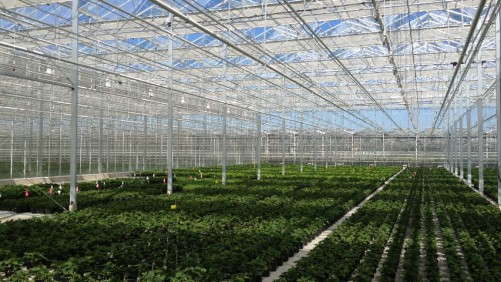 Smith Gardens Stabilizes Greenhouse Climate With Light-Diffusing Screens