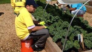 National Garden Bureau Launches Therapeutic Garden Program
